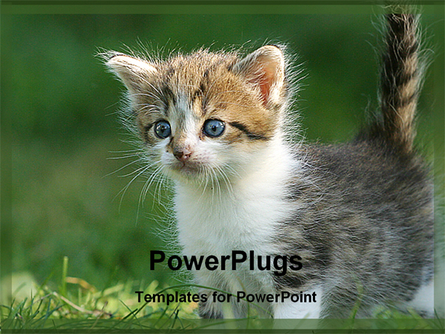 Powerpoint Background Cats Powerpoint Template Cat in a