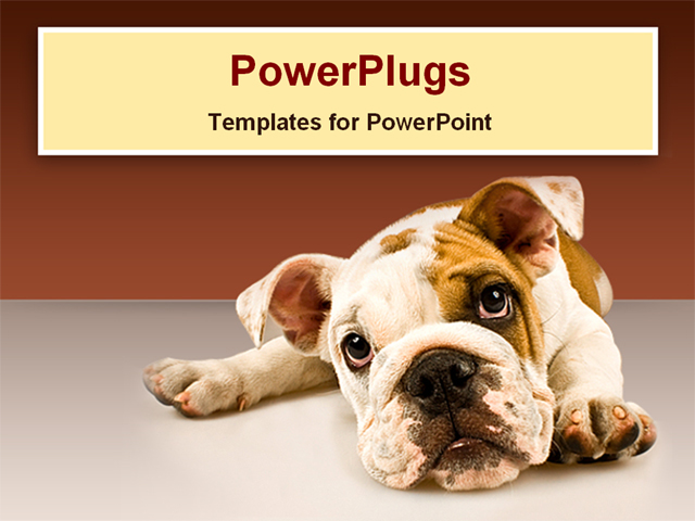 Animal Powerpoint Template