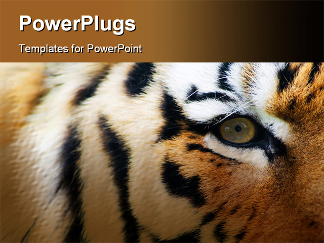 picture suggestion for microsoft powerpoint themes animals, Powerpoint