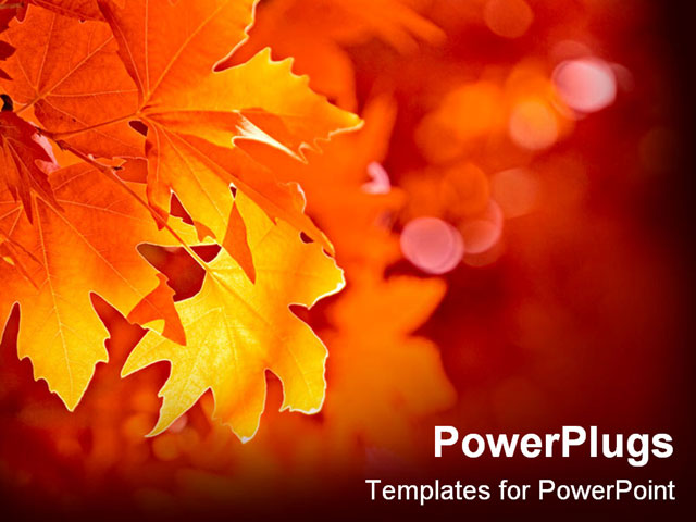 Fall powerpoint template fall church graphics powerpoint fall powerpoint template close up yellow leaf during fall 2360 fall powerpoint template toneelgroepblik Gallery