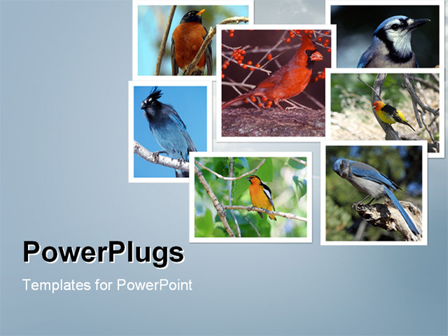 PowerPoint Template - Collage of different songbirds consisting of seven images on cloud blue background - Title Slide