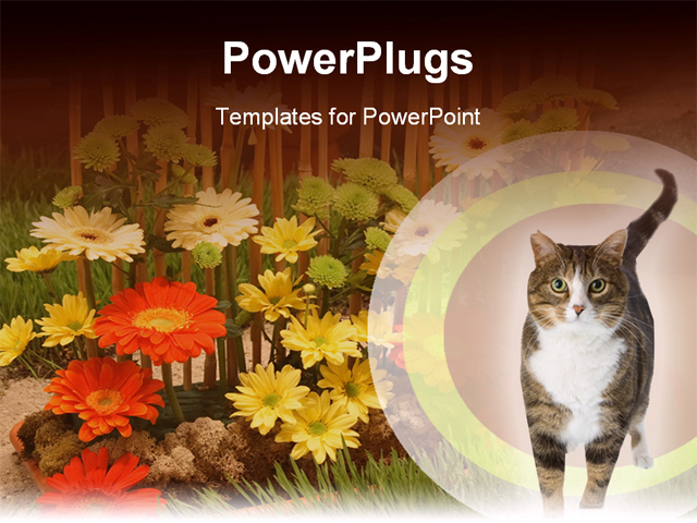 Powerpoint Background Cats Cat Powerpoint Backgrounds