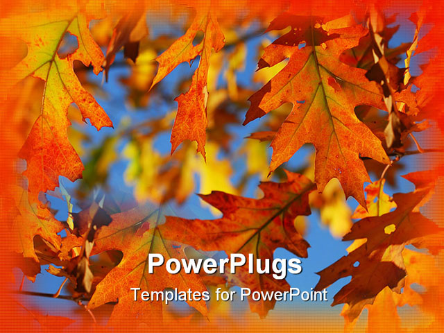 Powerpoint template about fall oak leaves autumn