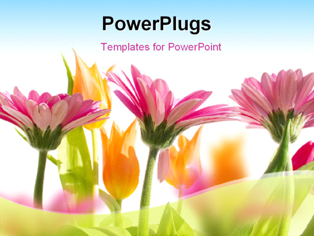 Images Of Blue Flowers Spring Powerpoint  Sc