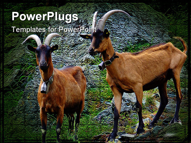 Alpine goats with horns - photo#10