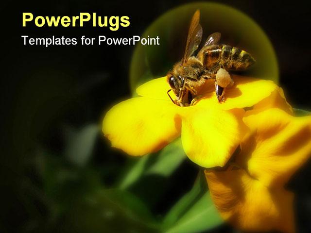 Bee powerpoint template militaryalicious bee powerpoint template toneelgroepblik Gallery