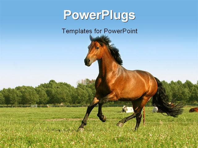 Free Horses Powerpoint Template Mandegarfo