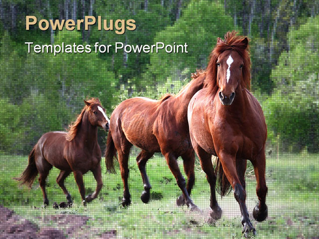 PowerPoint Template - Horses chasing each other across a meadow - Title Slide