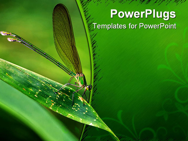 PowerPoint Template: Insect Sitting On The Leaf Of Maize