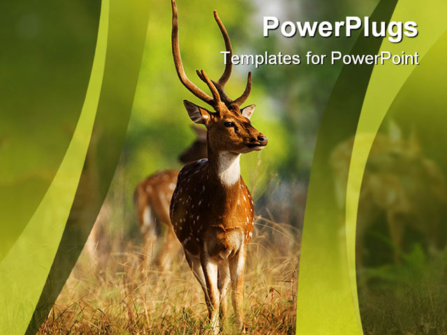 PowerPoint Template about male axis, animal, antelope