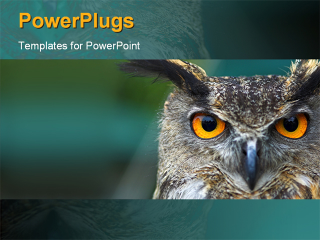 owl wallpapers for powerpoint - photo #28
