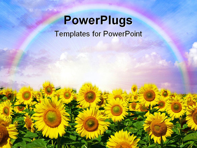 Orange Sunflower Powerpoint   sunflower and sky flowers