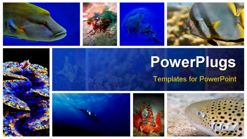 Powerpoint backgrounds underwater more information powerpoint template collage powerpoint backgrounds underwater toneelgroepblik Gallery
