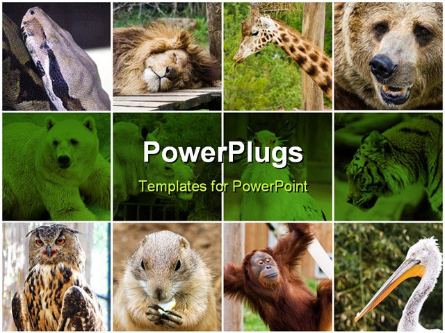 animal powerpoint templates.  best images about animals, Powerpoint